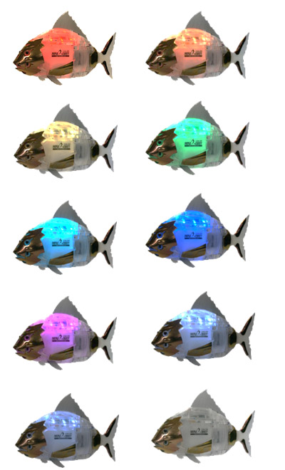 fish-kr62